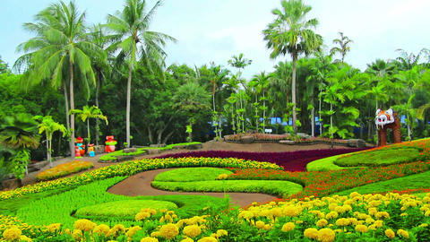 flowers in Nong Nooch tropical garden in Thailand Stock Video Footage