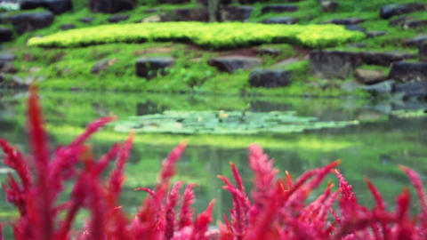 focusing from flowers to pond in park Stock Video Footage