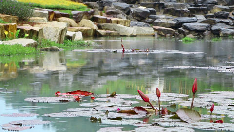 pond in park during rain Stock Video Footage