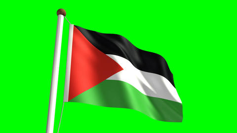 Palestine flag Stock Video Footage