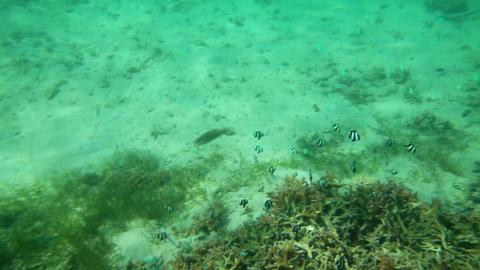underwater life Footage