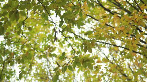 Autumn Branch Stock Video Footage