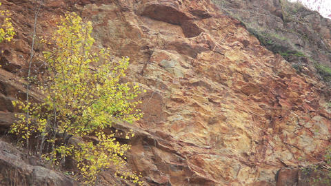 Tree on Rock Stock Video Footage