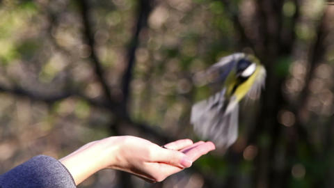 Birds eat the seeds with your hands Stock Video Footage