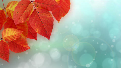 Nature Bokeh Dot Background stock footage