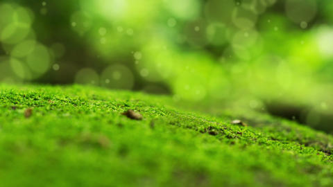 Moss Bokeh Dot Background Stock Video Footage