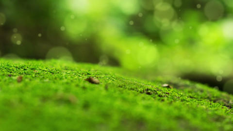 Moss Bokeh Dot Background Animation
