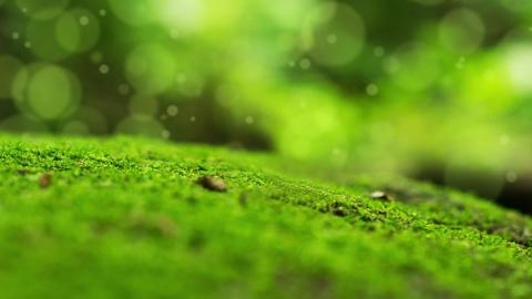 Moss Bokeh Dot Background Stock Video Footage