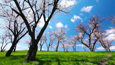spring landscape Stock Video Footage