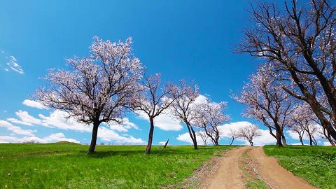 spring landscape Footage