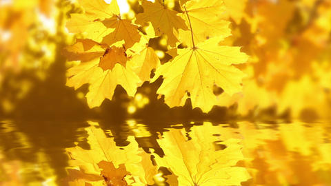 Autumn Reflection stock footage