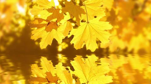 Autumn reflection Stock Video Footage