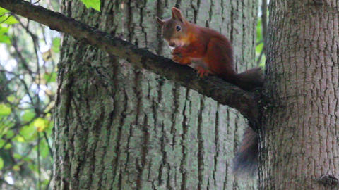 squirrel on tree in park Stock Video Footage