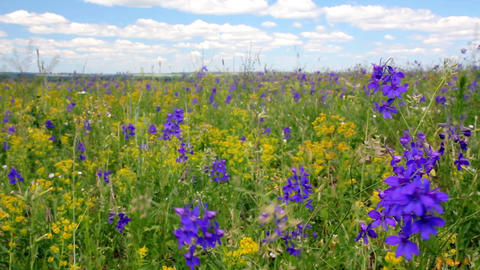 Meadow flowers under blue sky Footage
