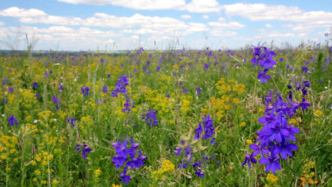 Meadow flowers under blue sky Stock Video Footage