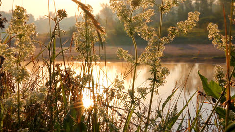 grass on riverside at dawn Stock Video Footage