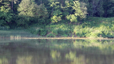 morning landscape with river in forest Stock Video Footage