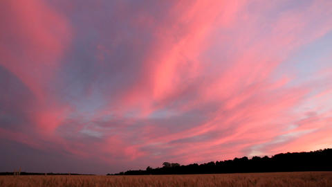 landscape with wheat field after sunset Stock Video Footage
