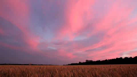 landscape with wheat field after sunset Footage