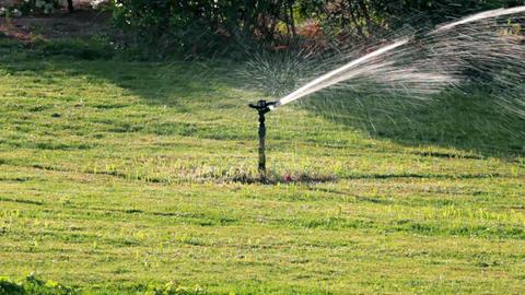 sprinkler watering green lawn Footage
