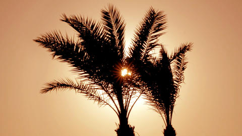 silhouette of palm tree against setting sun Footage