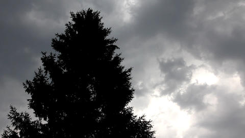 fir top in strong wind under storm sky Footage