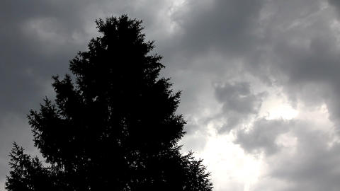 fir top in strong wind under storm sky Stock Video Footage