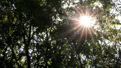 bright sun shines through tree foliage Stock Video Footage