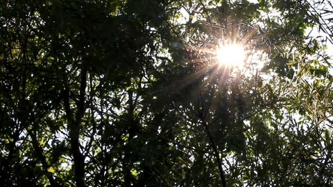 bright sun shines through tree foliage Footage