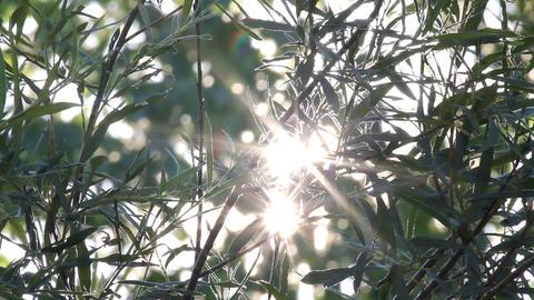 bright sun shines through tree foliage Stock Video Footage