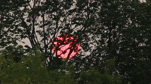 timelapse with sunset sun behind trees Stock Video Footage