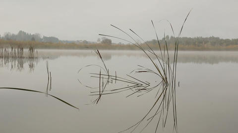 lake landscape in mist - stems of reeds reflected  Footage
