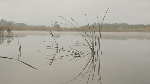 lake landscape in mist - stems of reeds reflected Stock Video Footage