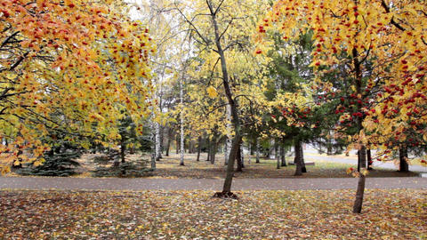 autumn park Stock Video Footage