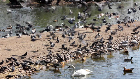 many birds feeding Stock Video Footage