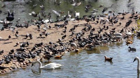 many birds feeding Stock Video Footage