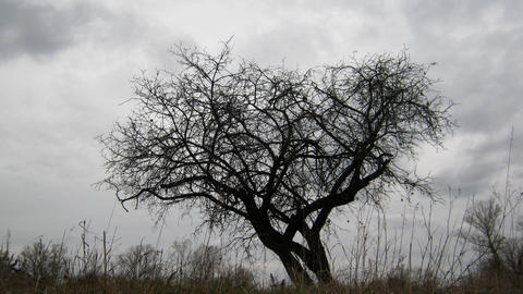 dry tree under moody overcast sky Footage