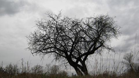 dry tree under moody overcast sky Footage