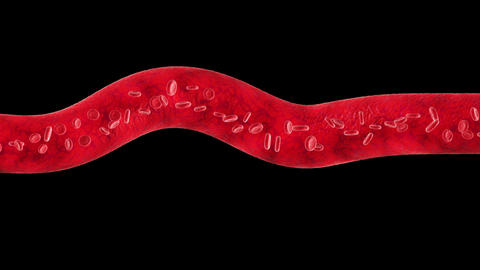 Veins with flowing Blood Cells. Every part is loop Stock Video Footage