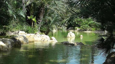 Mediterranean Palm Tree Garden 1 Stock Video Footage