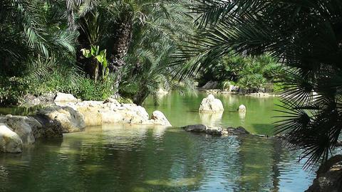 Mediterranean Palm Tree Garden 1 Footage