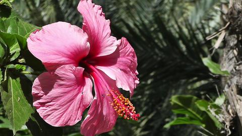 Mediterranean Palm Tree Garden 9 flower Stock Video Footage
