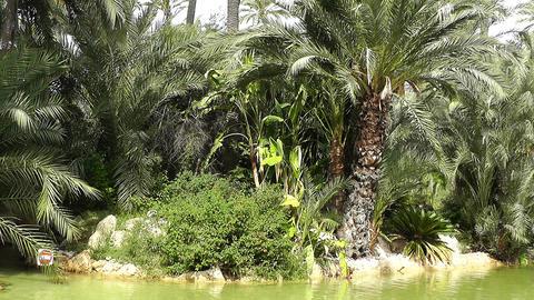 Mediterranean Palm Tree Garden 13 Stock Video Footage