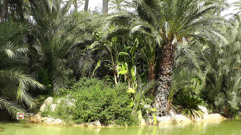 Mediterranean Palm Tree Garden 13 Footage