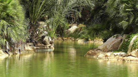 Mediterranean Palm Tree Garden 15 Footage