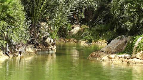 Mediterranean Palm Tree Garden 15 Stock Video Footage