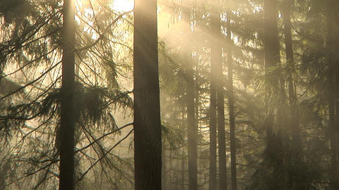 Morning forest, time lapse Stock Video Footage
