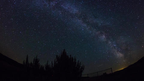 Milky way in the night sky with plants silhouette Footage