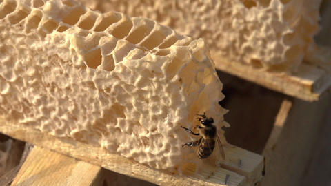 Bee And Honey HD stock footage