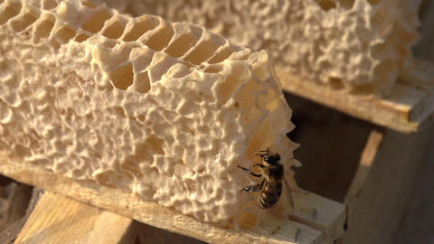 Bee and Honey HD Stock Video Footage